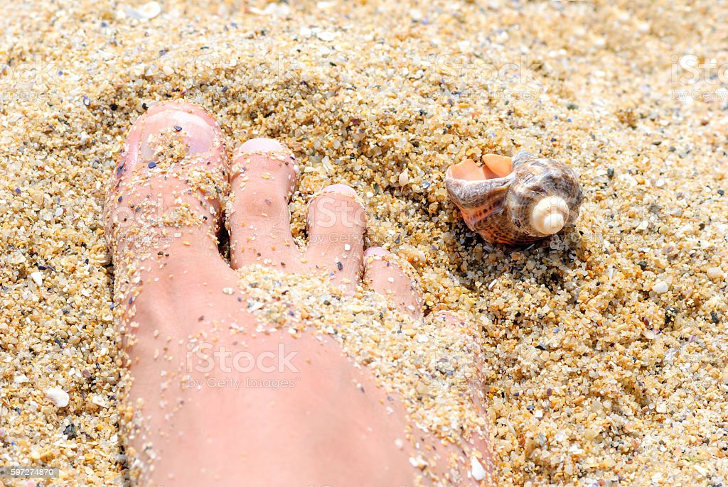 sand foot shell royalty-free stock photo