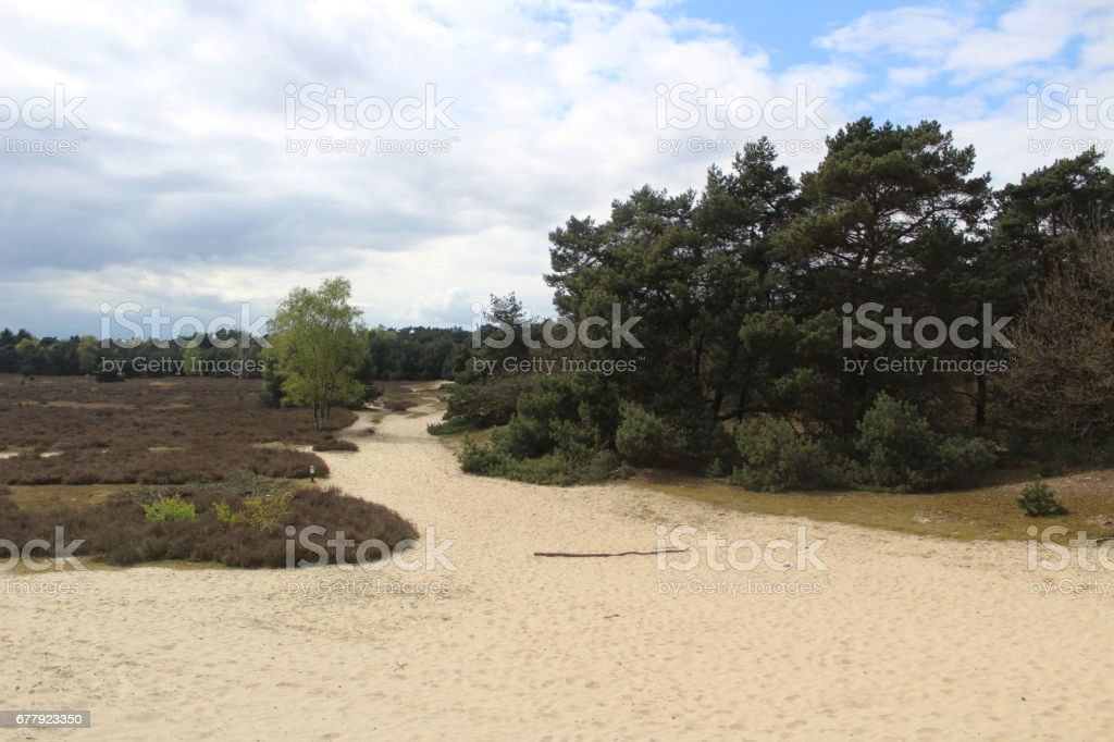 Sand heath royalty-free stock photo