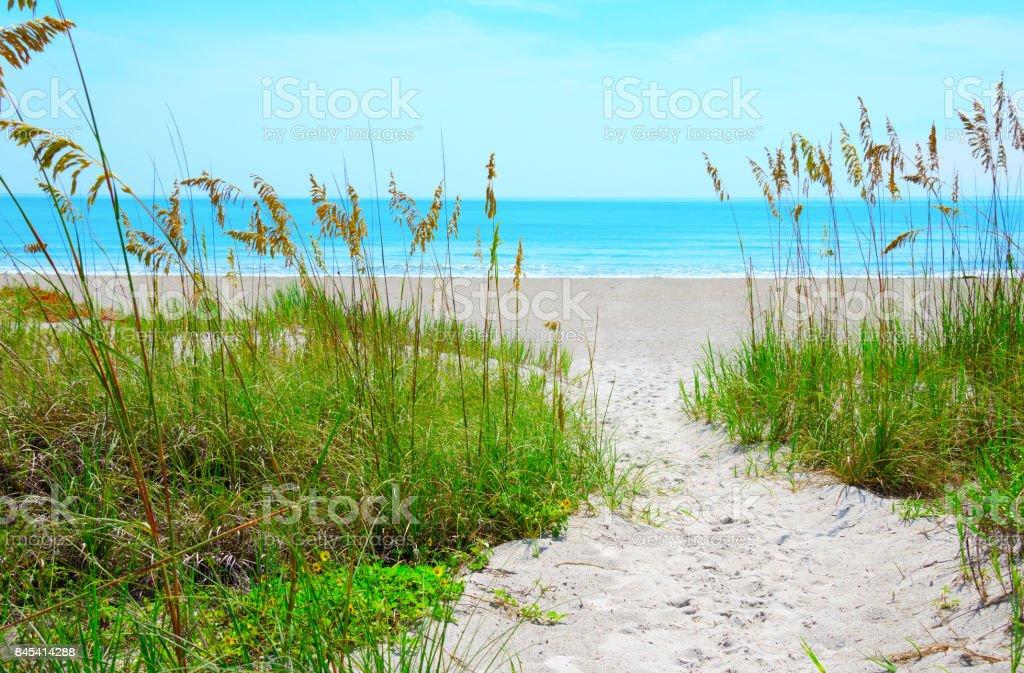 Caminho de areia através de aveia mar praia calmo oceano azul - foto de acervo