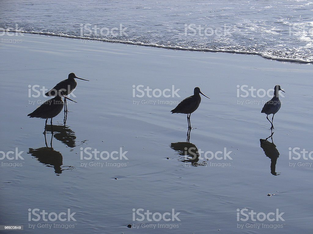 Sand Pipers #1 royalty-free stock photo