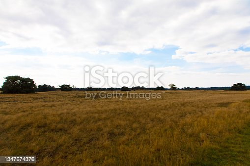 istock Sand Plain and Dunes in a dutch nature reserve Kootwijkerzand with a blue sky. Place for text. 1347674376