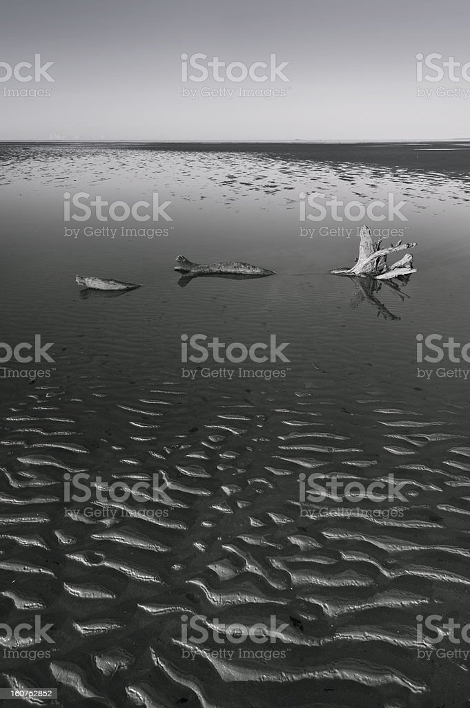 Sand Ripples And Driftwood royalty-free stock photo