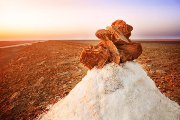 roses des sables - rose des sables photos et images de collection