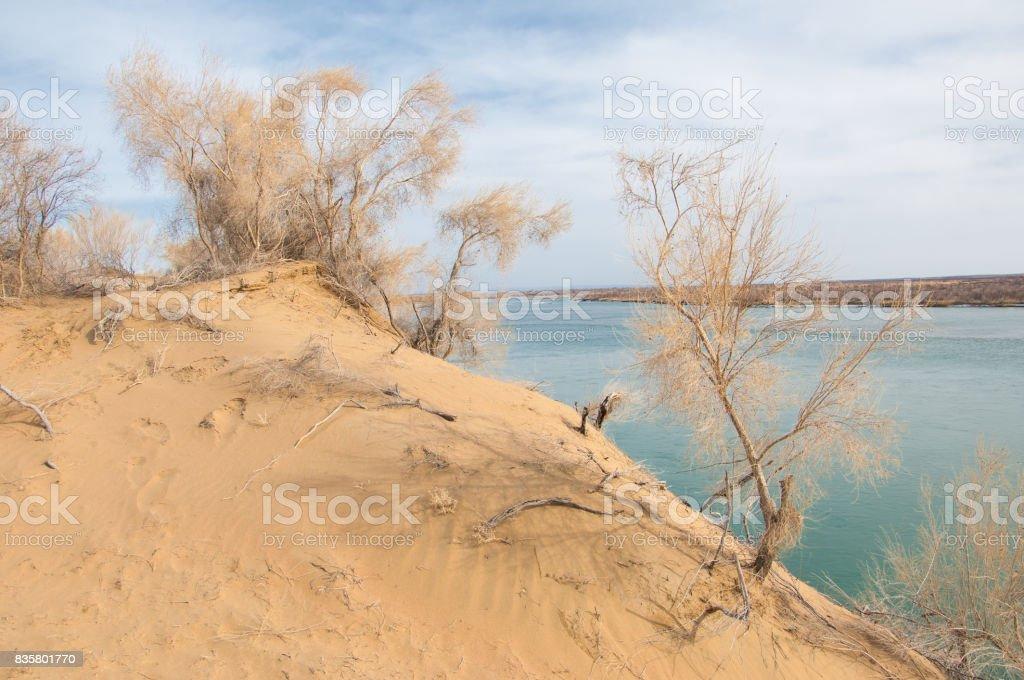 sand. spring. water. snow. Haloxylon stock photo