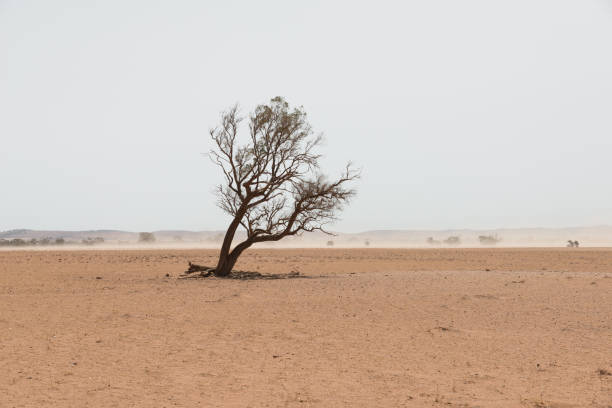 Sand storm in remote Australian agricultural farm field. Climate change or global warming concept for drought as a natural disaster. stock photo