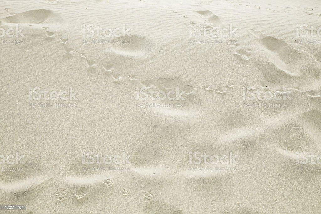 Sand Tracks stock photo