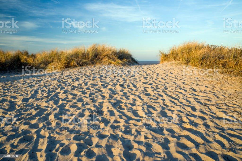 Sanddüne mit Strandhafer stock photo