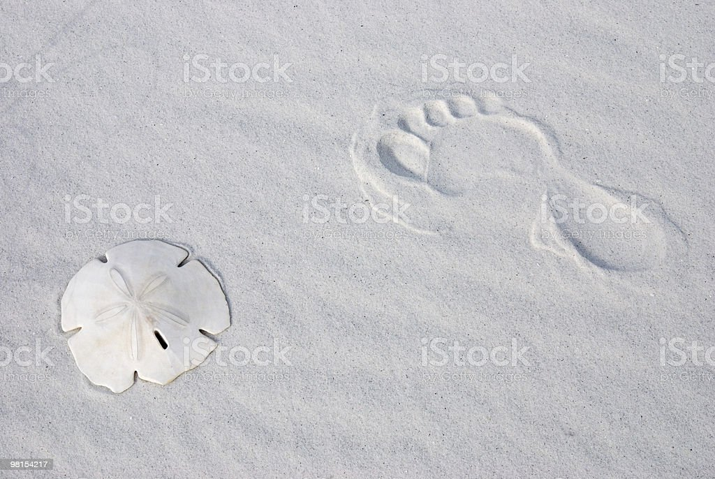 Sand-Dollar & Foot Print in the Sand royalty-free stock photo