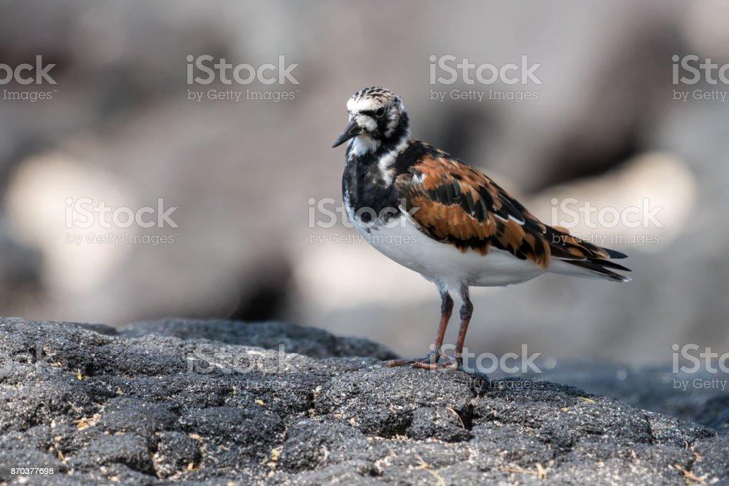 Sanderling on shore stock photo