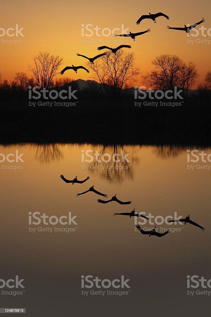 Sandhill Cranes at Sunset stock photo