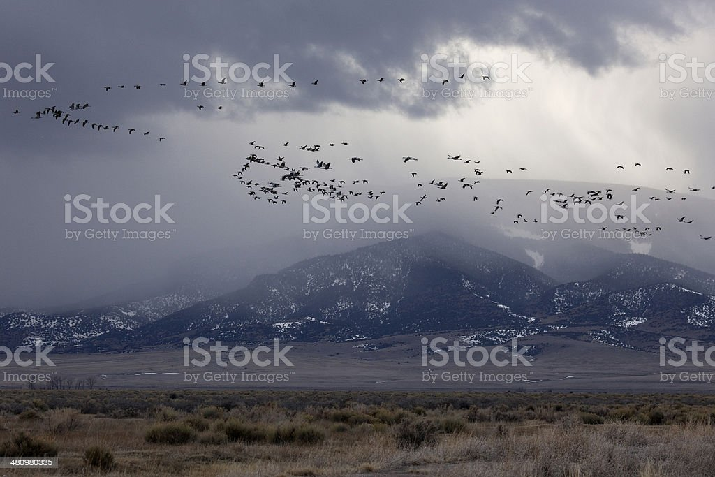 Sandhill Cranes fly past stormy Colorado Rocky Mountains stock photo