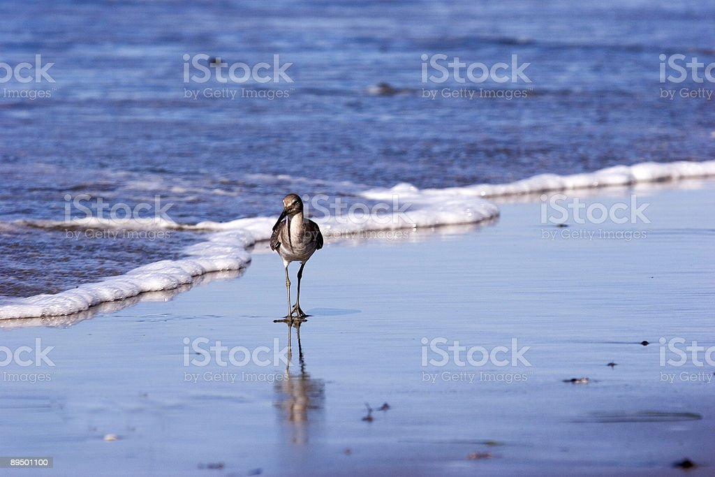 Sandpiper At The Water's Edge royalty free stockfoto