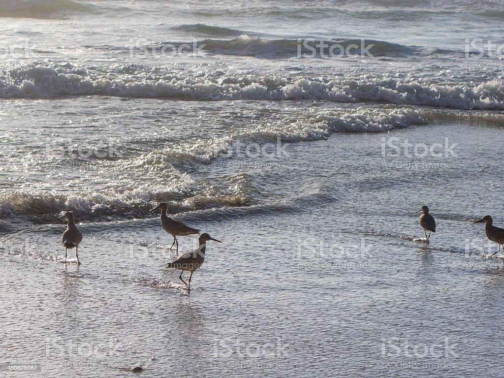 Sandpipers on the Beach stock photo