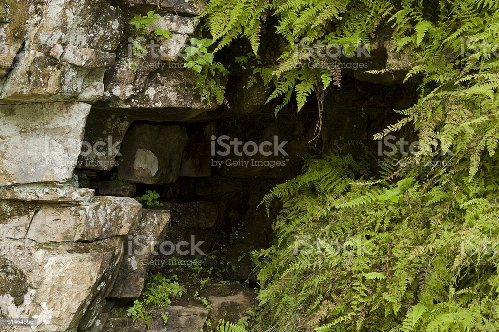 Sandstone and Ferns stock photo