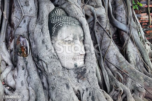 sandstone buddha head in tree root