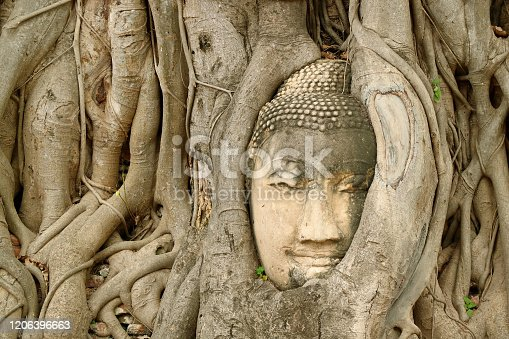Sandstone Buddha Image's Head Trapped in the Tree Roots at Wat Mahathat Ancient Temple, UNESCO World Heritage Site in Ayutthaya, Thailand