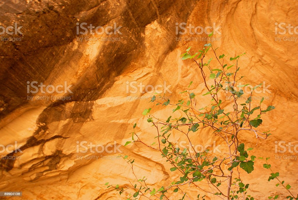 sandstone wall and tree royalty-free stock photo