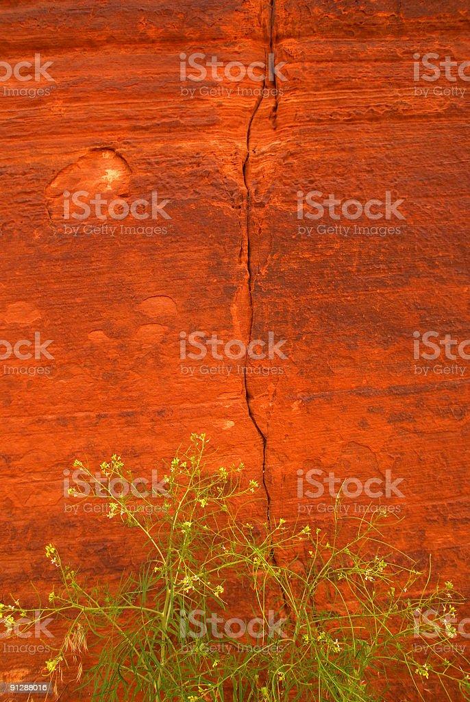 sandstone wildflowers royalty-free stock photo