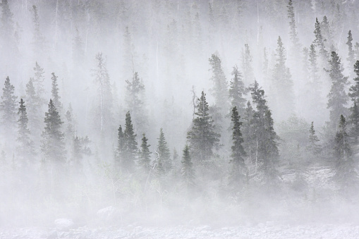 Sandstorm dust carried by sixty-mile-per-hour winds turns northern white spruce trees into ghosts in the mountainous Kluane region of the Yukon, Canada.