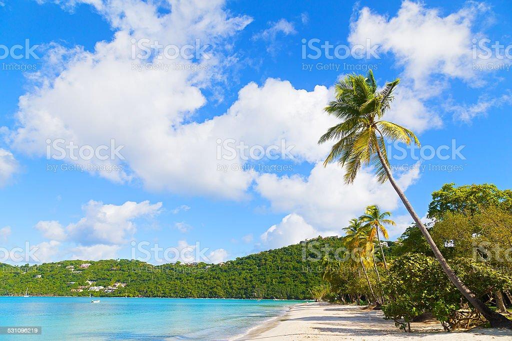 Sandy beach on a tropical island. stock photo