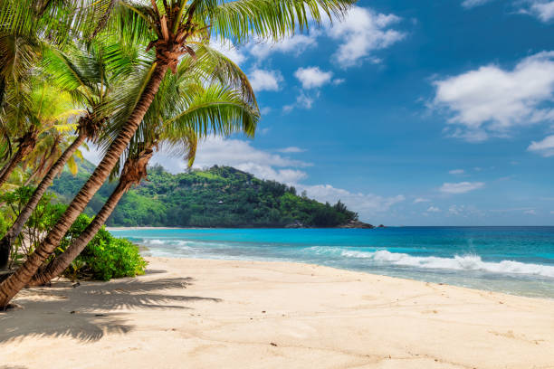 Sandy beach on exotic island stock photo