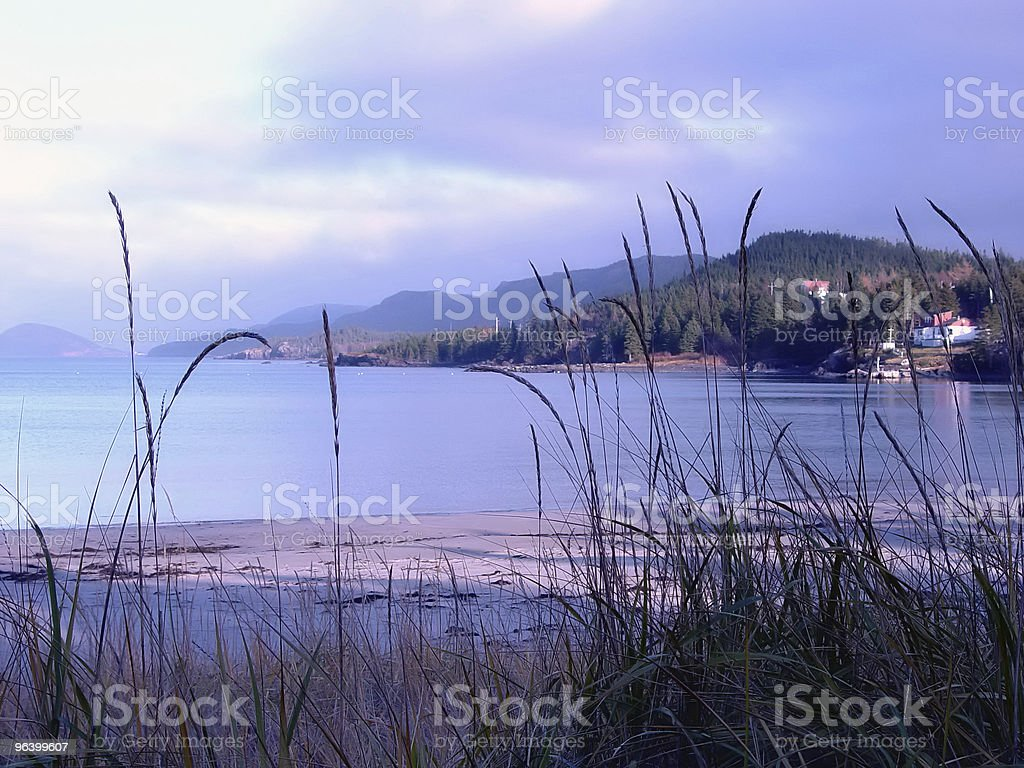 Sandy Beach with Grass royalty-free stock photo
