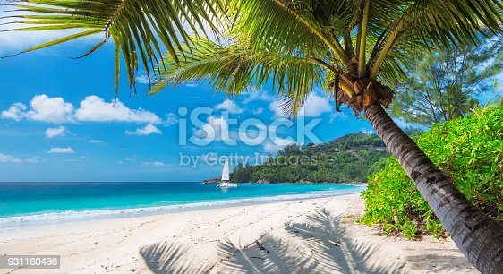 istock Sandy beach with palm trees and a sailing boat 931160498