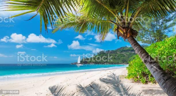 Sandy beach with palm trees and a sailing boat picture id931160498?b=1&k=6&m=931160498&s=612x612&h=4cwdktjxetg1tdzynoj5yakl25rijon7letfkoj8h4o=