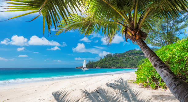 sandy beach with palm trees and a sailing boat - caribbean stock pictures, royalty-free photos & images