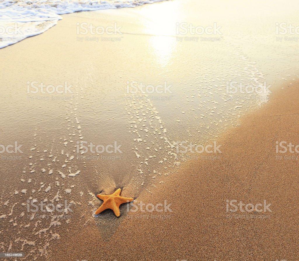 Sandy Beach With Starfish stock photo