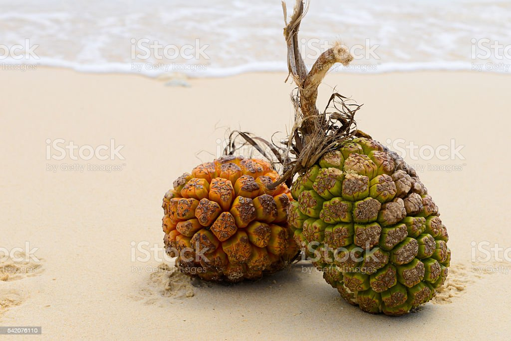 Sandy beaches and tropical image stock photo