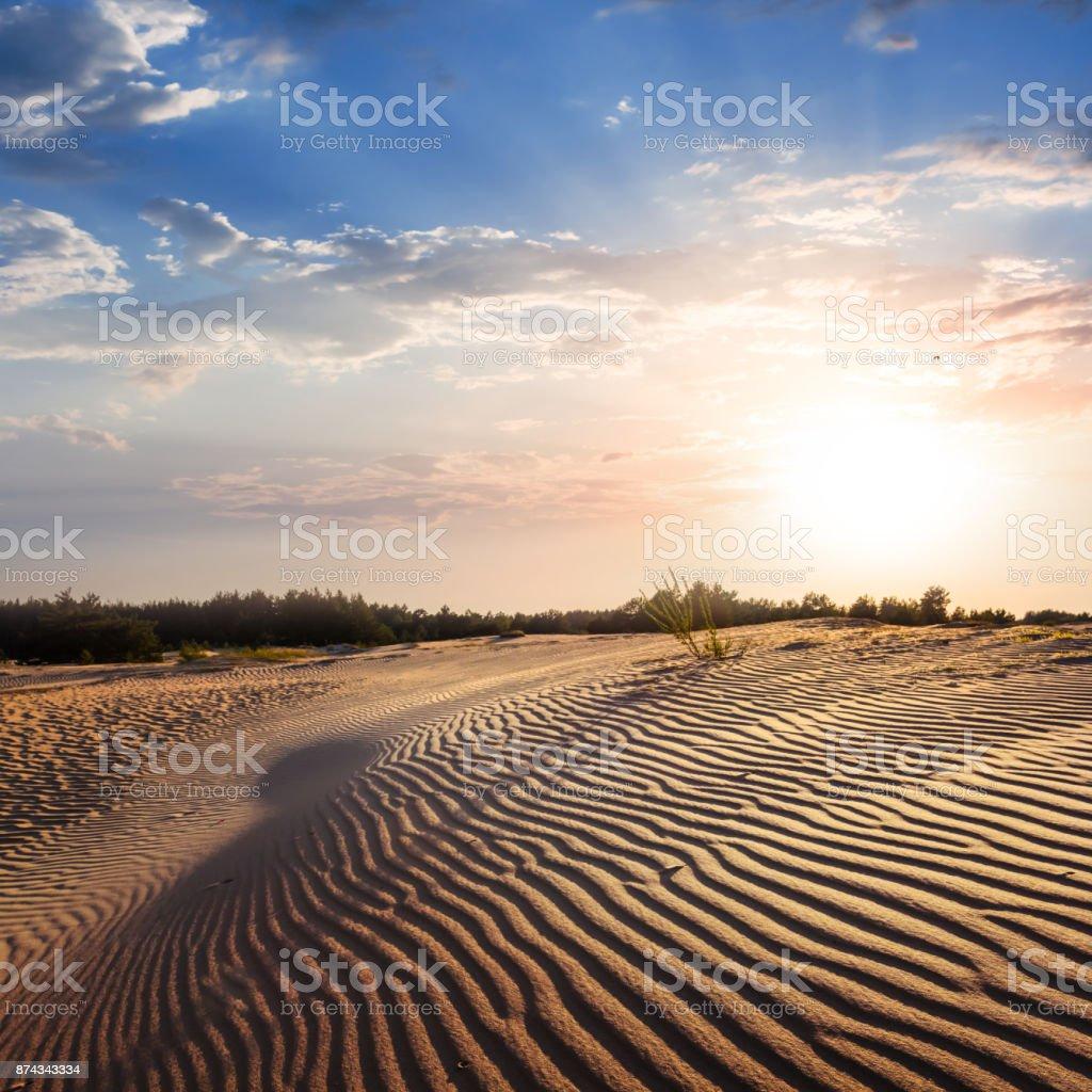 sandy desert at the sunset stock photo