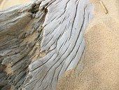 Driftwood on a sandy beach.