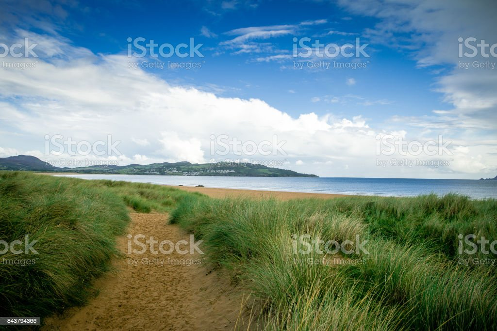 Sandy dunes and wild grasses along the coast stock photo