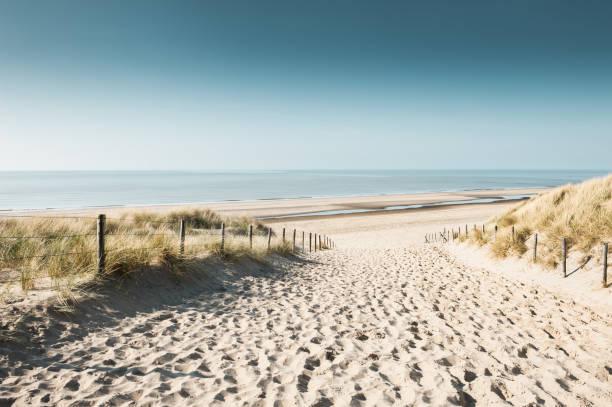 sandy sanddyner på kusten av nordsjön - sanddyn bildbanksfoton och bilder