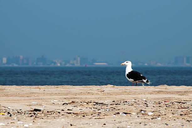 Sandy Hook Beach – Foto