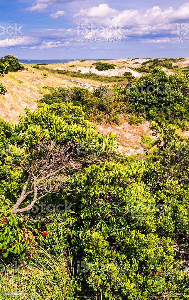 Sandy Neck Dunes stock photo