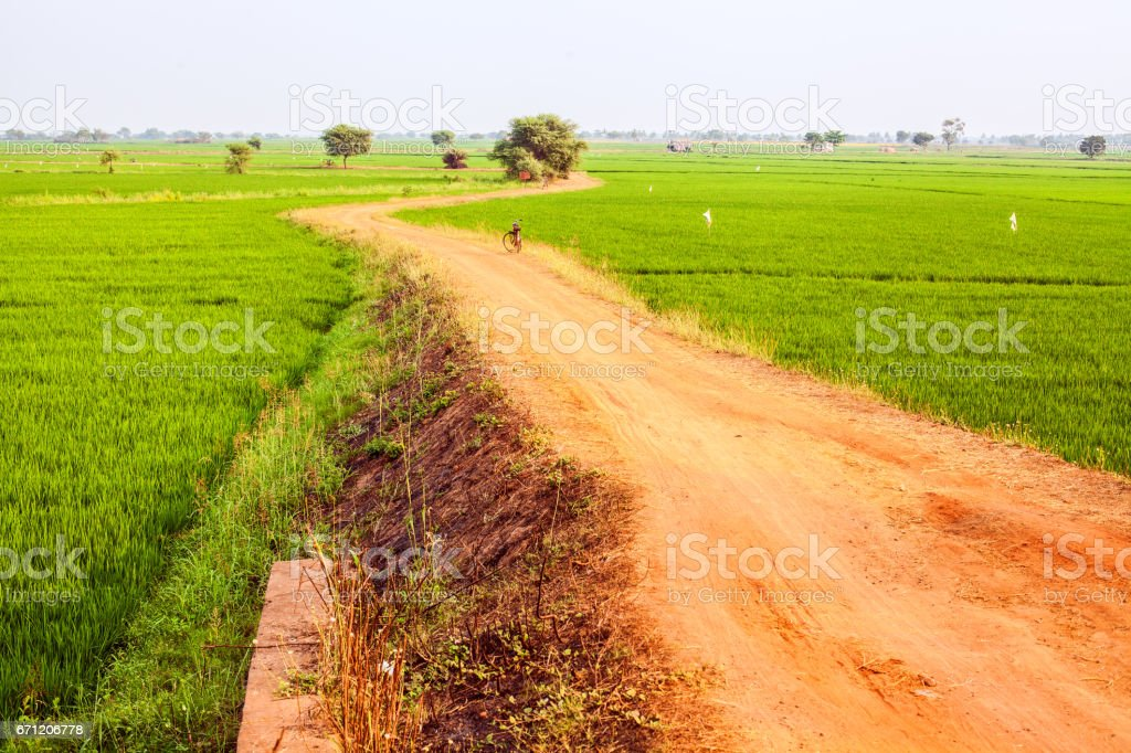 A sandy road through a rice field stock photo
