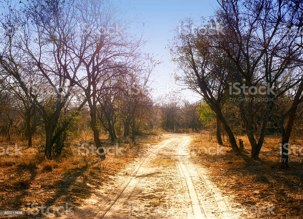 Sandy road with tire track in African Game Reserve stock photo