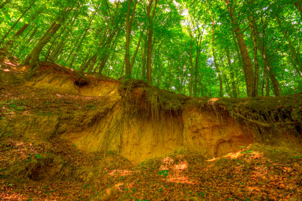 Sandy scarp inside forest stock photo