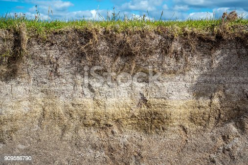 A cross section of a sandy soil loam, with grass growing on the top.