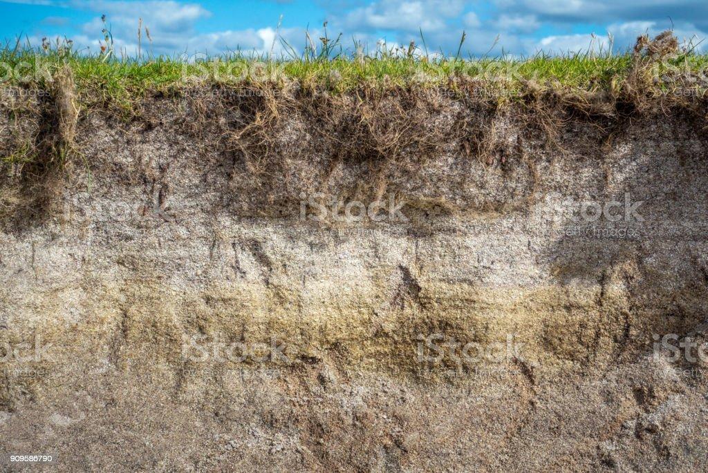 Sandy soil cross section stock photo