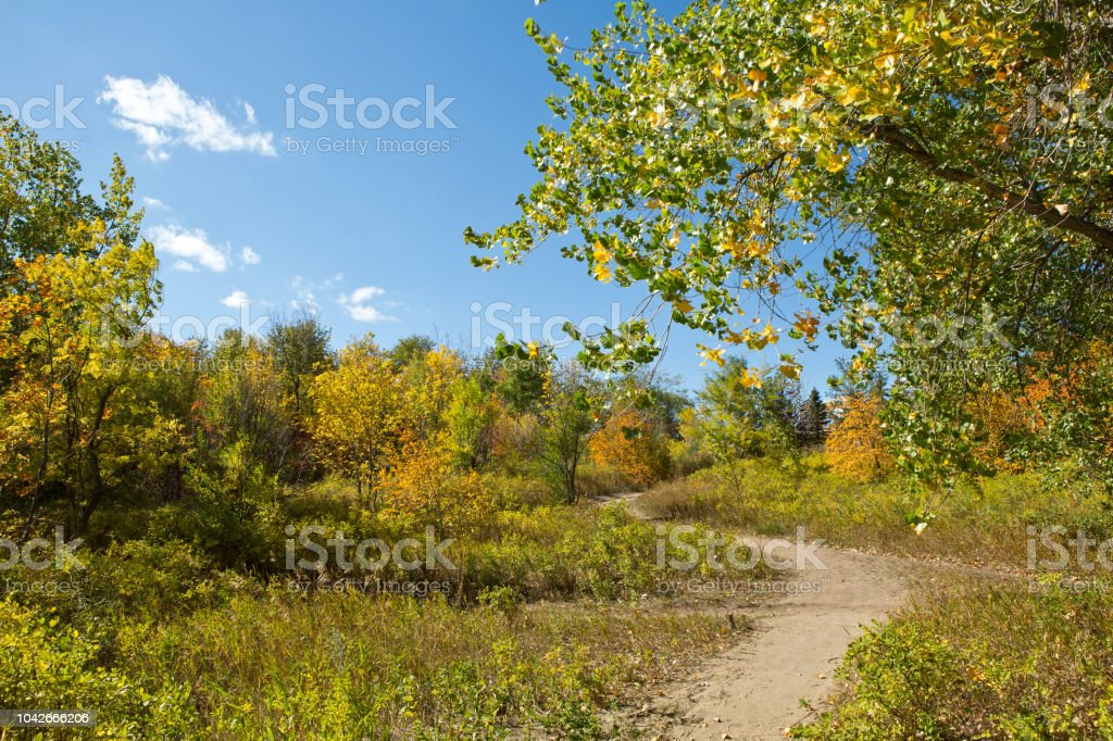 Sandy trail in trees with blue sky stock photo