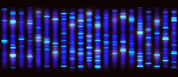 sanger sequencing background - genetic research stock pictures, royalty-free photos & images