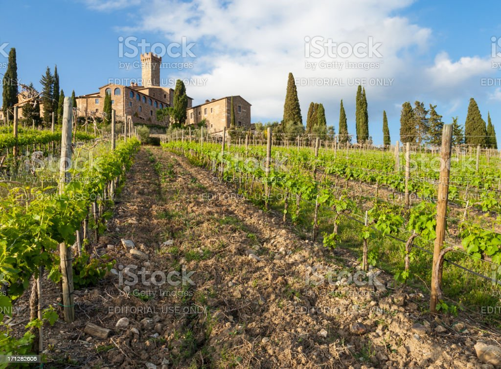 Sangiovese vineyard in the late afternoon royalty-free stock photo