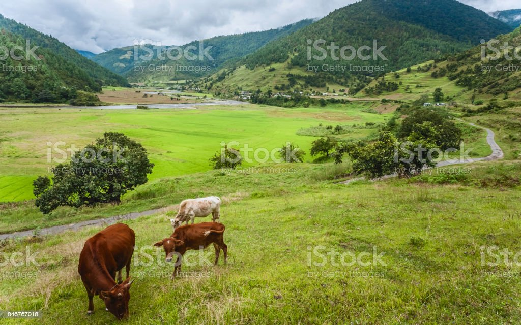 Sangti valley and river flanked by forested mountain slopes, Arunachal Pradesh, India. stock photo