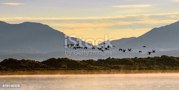 Flock of sanhill cranes flying over San Luis Lake. Sangre de Cristo Mountains. Southern Colorado.