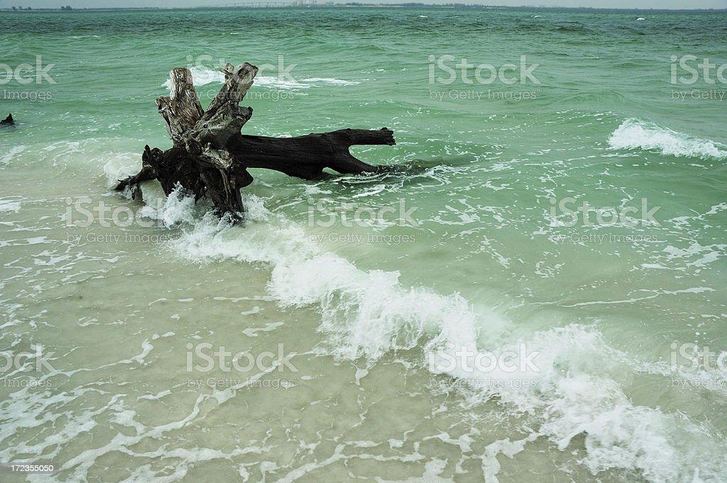 Isla Sanibel tocón de árbol foto de stock libre de derechos