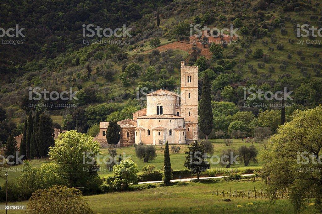 Sant Antimo Montalcino church and olive tree. Orcia, Tuscany, It stock photo