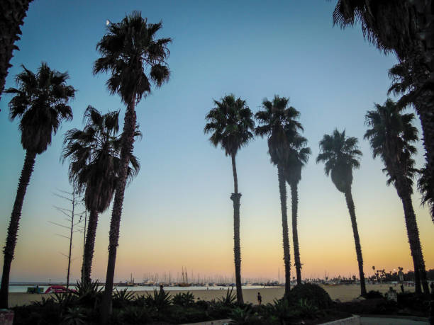 Santa Barbara beach with palm trees. - Stock image – Foto